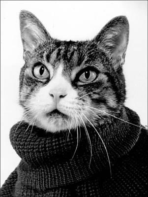 Photograph - Hemingcat by Richard Watherwax
