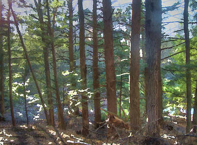 Photograph - Hemlocks by Betsy Zimmerli