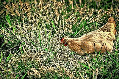 Photograph - Hen Art by Lesa Fine