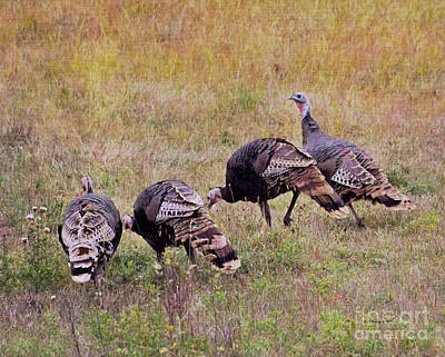 Photograph - Hen Party by Kathy M Krause