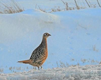 Photograph - Hen Pheasant by Kathy M Krause