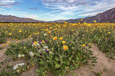 Henderson Canyon Super Bloom Print by Peter Tellone