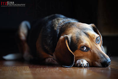 Photograph - Henry T. Beagle by ItzKirb Photography