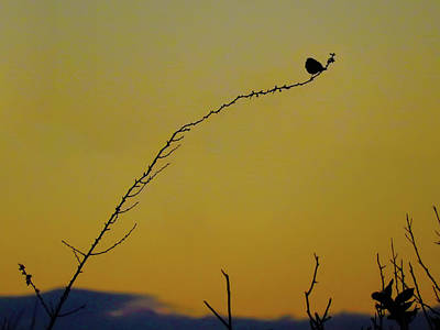 Photograph - Henry's Twig by Mark Blauhoefer