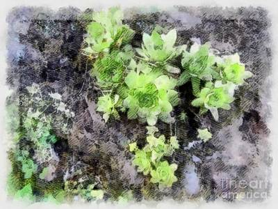 Photograph - Hens And Chicks - Botanical Illustration by Janine Riley