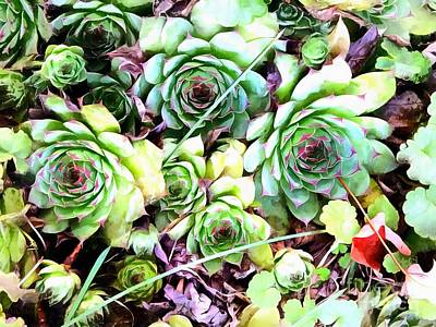 Photograph - Hens And Chicks - Garden Cheer by Janine Riley