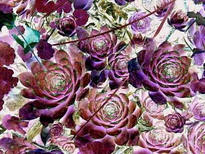 Hens And Chicks Photograph - Hens And Chicks - Plum Rose by Janine Riley