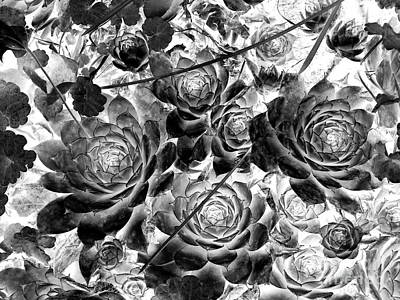 Photograph - Hens And Chicks - Vintage Black And White by Janine Riley