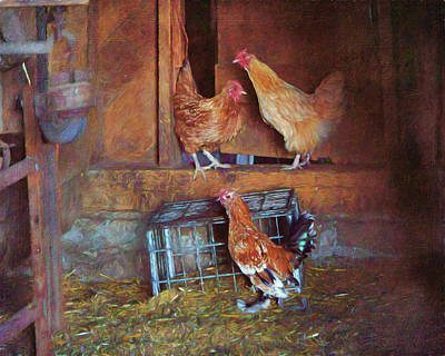 Photograph - Hens - Barn by Nikolyn McDonald