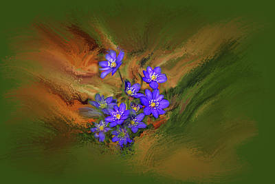 Hepatica Nobilis Painterly #h4 Art Print
