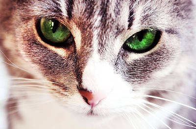 Photograph - Her Emerald Eyes. Kitty Time by Jenny Rainbow
