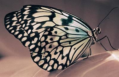 Butterfly Photograph - Her Heavenly Soul by The Art Of Marilyn Ridoutt-Greene