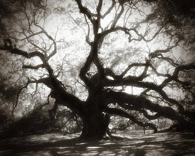Large Oak Tree Photograph - Her Majesty by Amy Tyler
