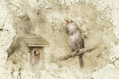 Wren Photograph - Her Morning Song by Jai Johnson