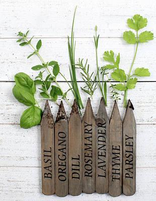 Photograph - Herb Garden by Rebecca Cozart