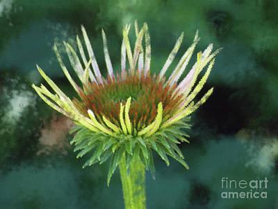 Spiny Digital Art - Herbaceous Beginning by Anita Faye