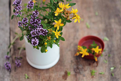 Photograph - Herbal Medicine. Fresh Herbs In The Mortar - Alternative Medicine. Thyme And Tutsan. by Yana Shonbina