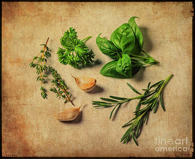 Photograph - Herbs #011 by Hans Janssen