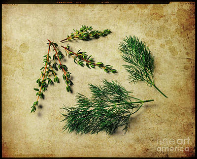 Photograph - Herbs #022 by Hans Janssen