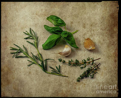 Photograph - Herbs #044 by Hans Janssen