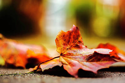 Photograph - Herbst_impressionen1 by Jacqueline Schreiber
