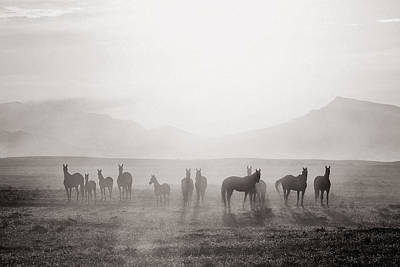 Horse Eye Photograph - Herd #3 by Artur Baboev