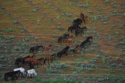 Konik Photograph - Herd #5 by Artur Baboev