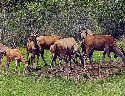 Photograph - Herd Of Antelopes - Lion Country Safari - Florida by Merton Allen