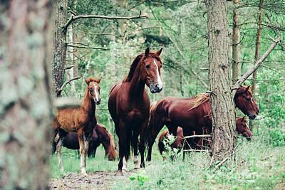 Staff Picks Cortney Herron - Herd of brown horses walking in the green forest. by Michal Bednarek