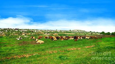 Photograph - Herd Of Cows Under A Blue Sky In Green Hills by Nika Lerman
