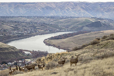 Herd Of Deer Above Swallow's Nest Rock Art Print