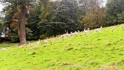 Photograph - Herd Of Deer by Jacek Wojnarowski