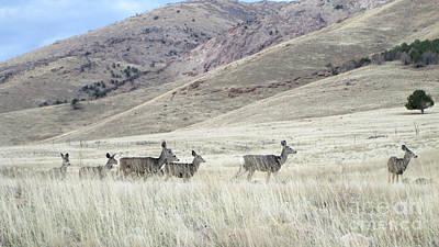 Missouri Whitetail Photograph - Herd Of Deer On The Range by Stephanie  Skeem