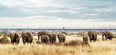 Photograph - Herd Of Elephant In Kenya Africa by Susan Schmitz