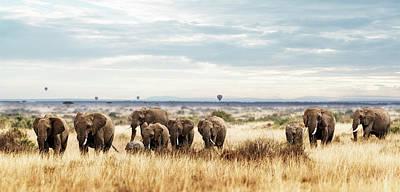 Photograph - Herd Of Elephant In Kenya Africa by Susan Schmitz