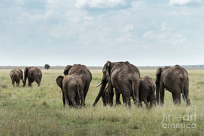 Photograph - Herd Of Elephants Walking In Serengeti by RicardMN Photography