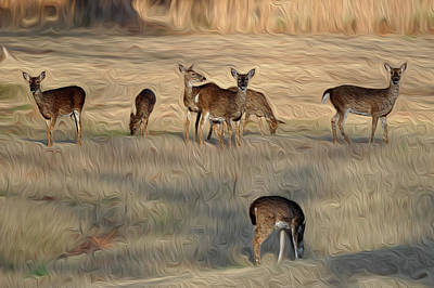 Photograph - Herd Of Grazing Deer by Michelle McPhillips