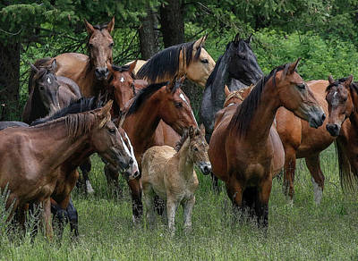 Photograph - Herd Of Horses by Athena Mckinzie