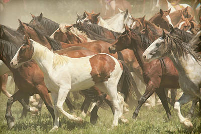 Photograph - Herd Of Horses by Steve McKinzie
