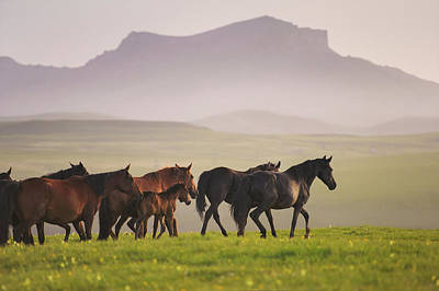 Photograph - Herd Of  Karachai Horses In The Mountains by Ekaterina Druz