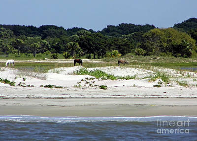Photograph - Herd Of Wild Horses On The Beach by D Hackett