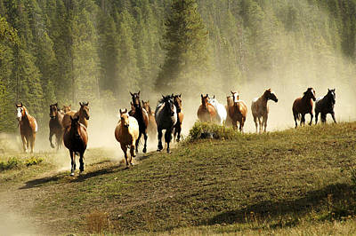 Herd Of Wild Horses Art Print