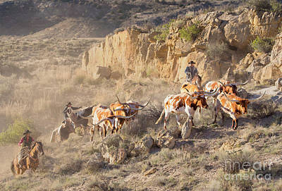 Working Cowboy Photograph - Herding Long Horns by Barb Young