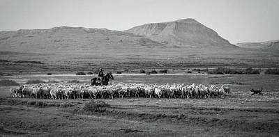 Photograph - Herding Sheep - Patagonia by Stuart Litoff