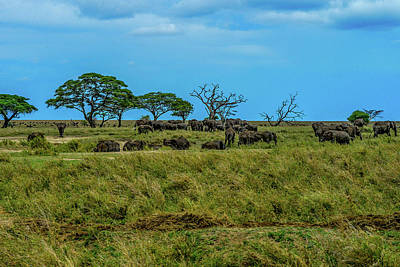 Photograph - Herds Of Elephants And Cape Buffaloes by Marilyn Burton