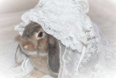 Bunnies Photograph - Here Comes The Bride... by The Art Of Marilyn Ridoutt-Greene