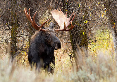 Photograph - Here Comes The King by Shari Sommerfeld