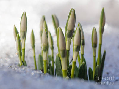 Photograph - Here Comes The Spring by Ismo Raisanen