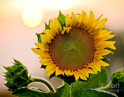 Bloosom Photograph - Here Comes The Sun by Nick  Boren