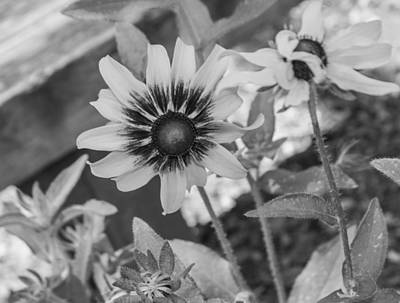 Photograph - Here I Am In Black And White by Arlene Carmel